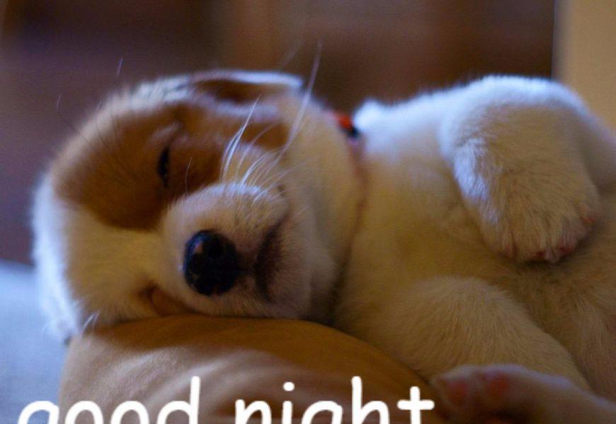 Lựa chọn những hình ảnh chúc ngủ ngon cho bạn