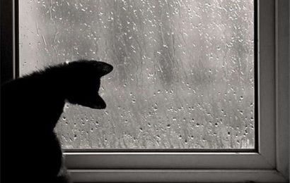Những câu stt buồn về mưa nghe nhói lòng