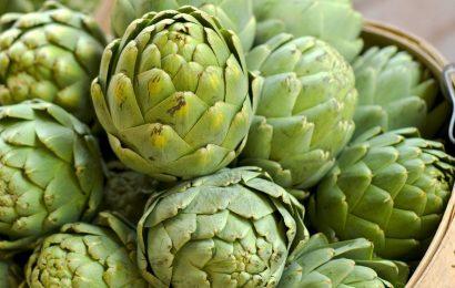 Tác dụng tuyệt vời của hoa atiso xanh ngâm rượu với gan