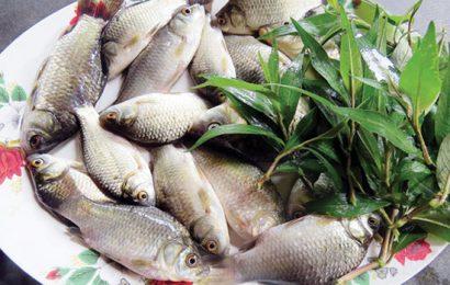 Cách kho cá diếc với dưa đậm đà, hấp dẫn, ngon cơm