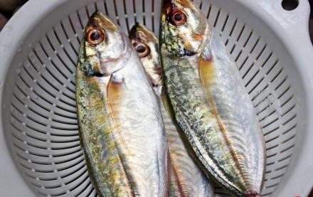 Mách bạn cách kho cá ngân thơm ngon với dưa chua kích thích vị giác 2
