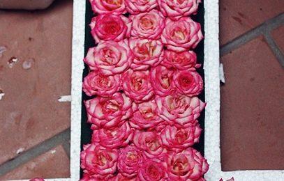 Cách cắm hoa hồng độc lạ vô cùng đơn giản dễ thực hiện