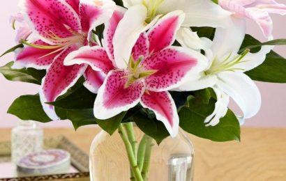 Cách cắm hoa ly không những đẹp mà còn sang trọng cho ngày 8/3