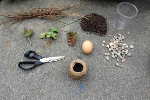 trồng cây vào vỏ trứng