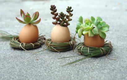 Làm vườn cây mini bằng vỏ trứng độc lạ ai cũng thích