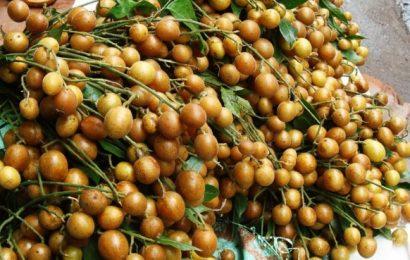 Trị ho với cách ngâm quả quất hồng bì với mật ong