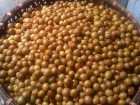cách ngâm quả quất hồng bì với mật ong 2