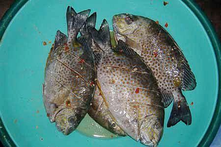 cách nấu cháo cá dìa