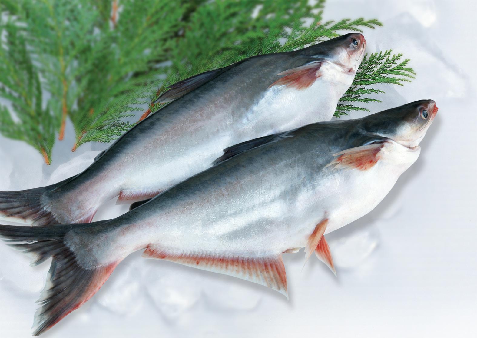cách nấu cháo cá tra ngon