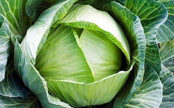 ăn bắp cải có tác dụng gì 3