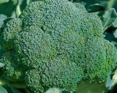 Bật mí cách trồng súp lơ xanh phát triển nhanh năng suất cao
