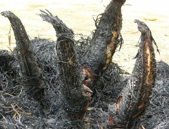 cá lóc nướng trui miền tây 2