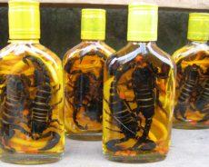 Cách ngâm rượu bọ cạp tại nhà chuẩn nhất