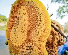 Cùng tìm hiểu xem sáp ong ngâm rượu có tác dụng gì?
