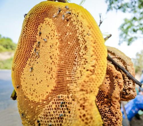 sáp ong ngâm rượu có tác dụng gì 1