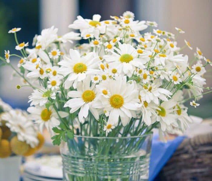 Cách cắm hoa cúc trắng ngày Tết đơn giản độc lạ