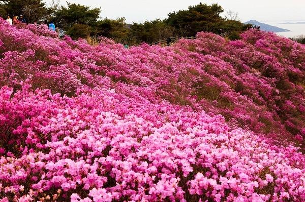 cách chọn hoa đào ngày Tết