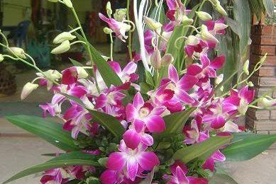 Hướng dẫn cách chọn và cắm hoa lan ngày Tết cuốn hút mọi ánh nhìn