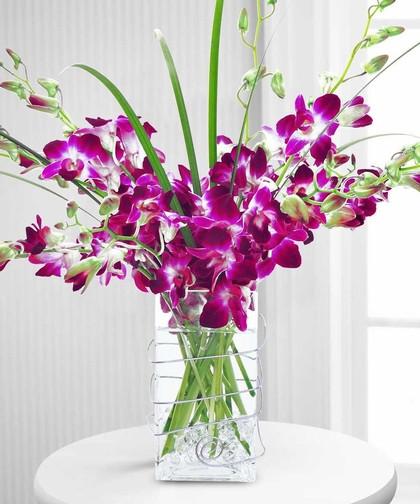 cách chọn và cắm hoa lan ngày Tết