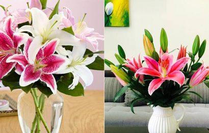 Hướng dẫn cách chọn và cắm hoa ly rực rỡ ngày Tết