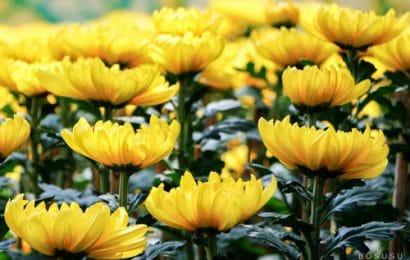 Những lưu ý khi chọn hoa cắm bàn thờ ngày Tết mà bạn nên biết