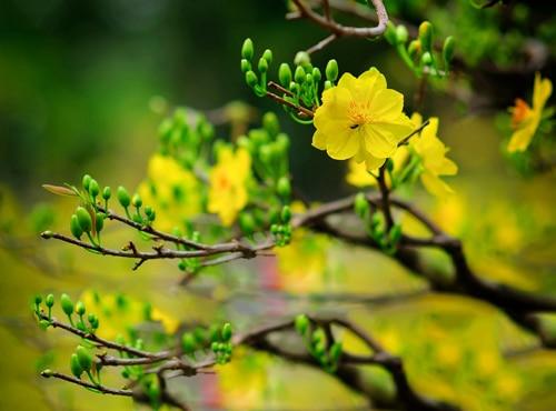 hoa cắm bàn thờ