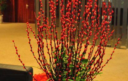 Giải đáp thắc mắc ngày Tết Kỷ Hợi năm nay nên cắm hoa gì?