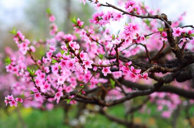 ý nghĩa của các loại hoa cắm Tết
